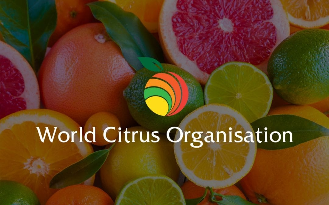 """Fruit Today : """"La WCO será una organización transparente"""""""